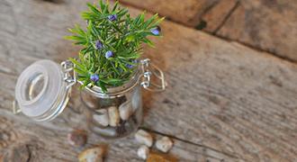 Petite plante grasse sur meuble en bois délabré.