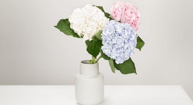 Décoration d'intérieur avec trois fleurs dans un pot.